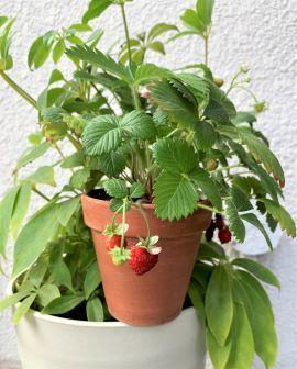 wildstrawberry.jpeg